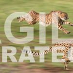 Agile Strategy article cheetah image